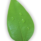 leaf-clean-1